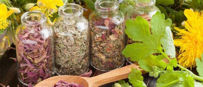 Болит желудок какие травы пить