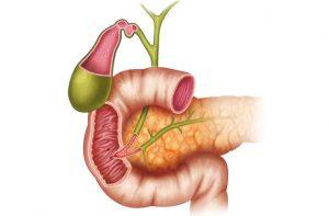 Питание при язве антрального отдела желудка